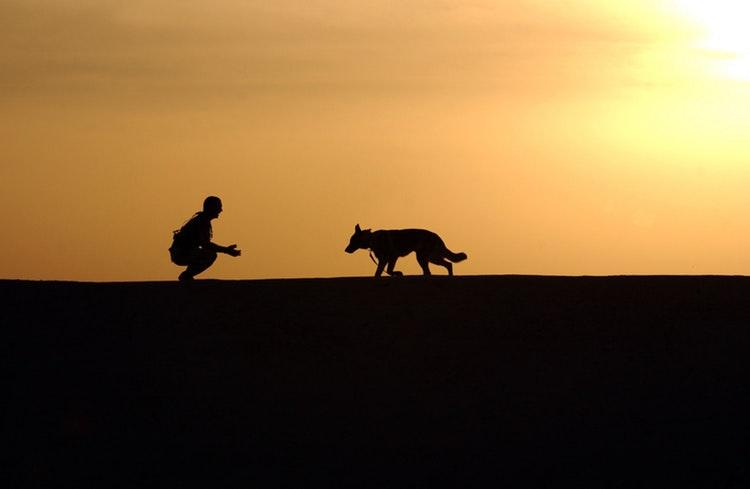 hund och människa i solnedgång